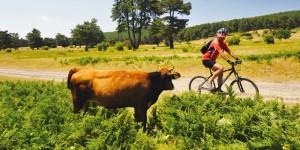 Kocayayla-Başalan Yaylası-İnegöl Yolu: 48 km