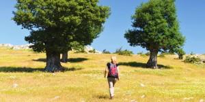 Narlıca-Gölyaka: 13 km