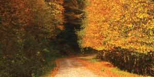 Sudüşen Yolu: 25 km