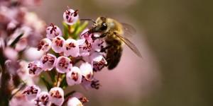26 Nisan / Arıların Doğurma Zamanı. Gül Ağaçların Bakım Zamanı. Fırtına