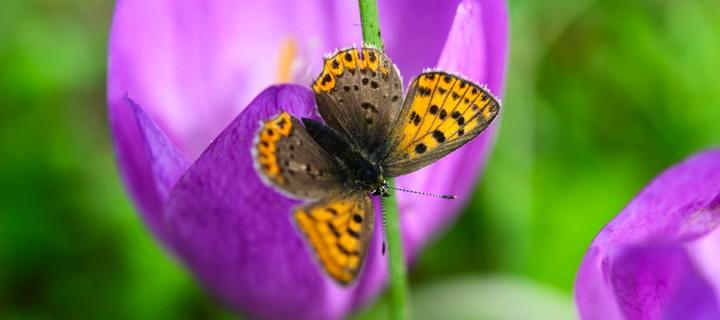 Pazaryeri İlkbahar Görsel Atölyesi 6 Nisan'da Başlıyor