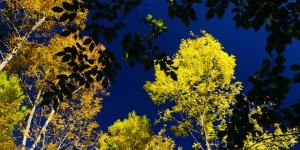 Bir Ormana En Çok Hangi Renk Yakışır?
