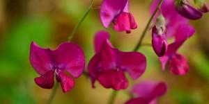 Sadağı Kanyonu'nun Çiçekleri
