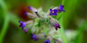 Ahı Dağı'nın Çiçekleri