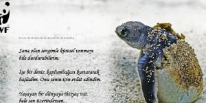 16 Haziran / Dünya Deniz Kampumbağaları Günü