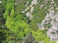 Sadağı Kanyonu Tabiat Parkı'nda Çınar Ağacı Olmak