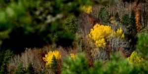 21 Ağustos / Yaprakların Sararması