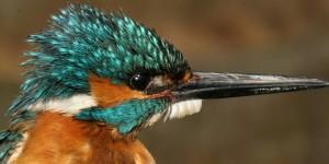 Türkiye'nin İlk Kuş Genetik Barkodlama Çalışması Yapıldı