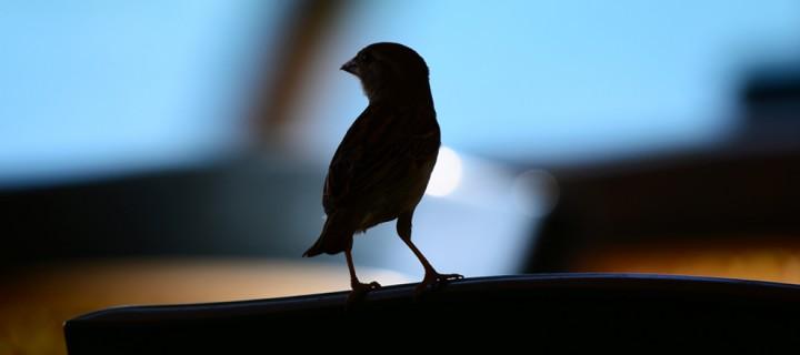 4 Ekim / Dünya Kuş Gözlem Günü. Hayvanları Koruma Günü