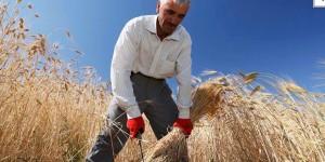 ETİ Burçak ve WWF-Türkiye, Türkiye'nin Buğdaylarına Sahip Çıkıyor!