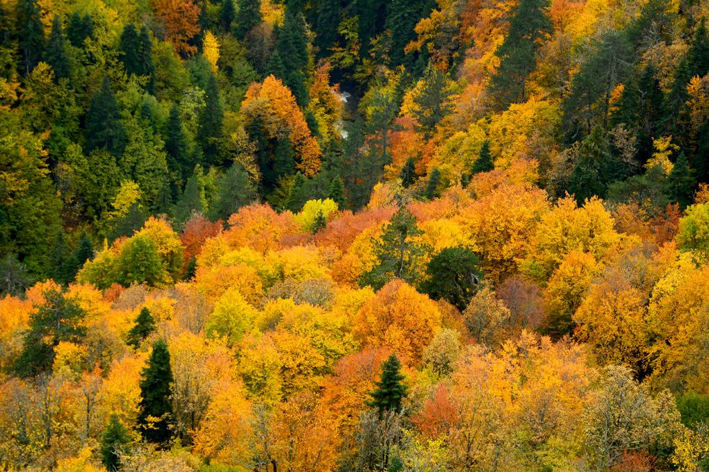 yenice-guz-orman