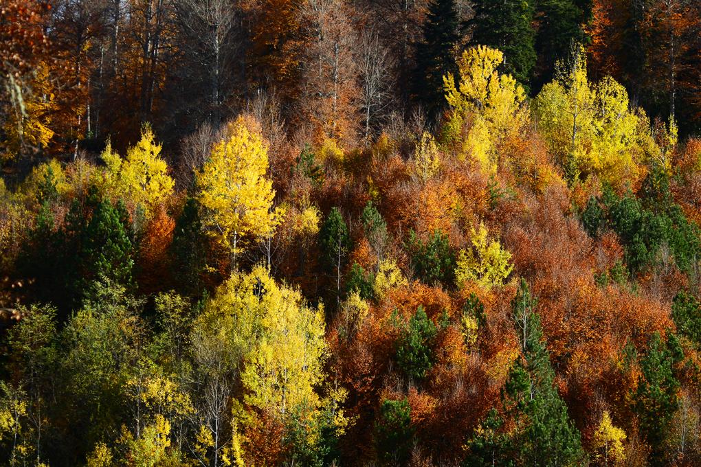 yenice-guz-ormanlar