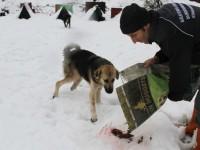 Sokak Hayvanlarına Kocaeli Büyükşehir'in Şefkat Eli Uzandı