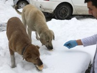 Göynük Belediyesi Sokak Hayvanlarını Unutmadı