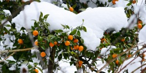6 Şubat / Ağaç Dikme Zamanı