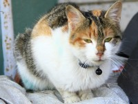 Engelli Kedileri Sahiplendi, İnsanlığa Örnek Oldu