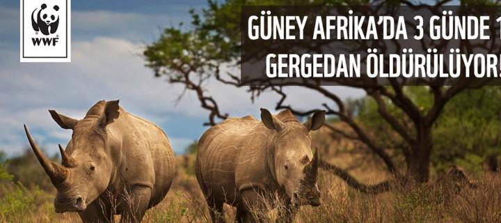 Güney Afrika'da 3 Günde 1 Gergedan Öldürülüyor