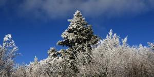 10 Mart / Ağaç Dikme Zamanı