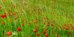 21 Mart / Nevruz. İlkbaharın Başlangıcı. Ekinoks