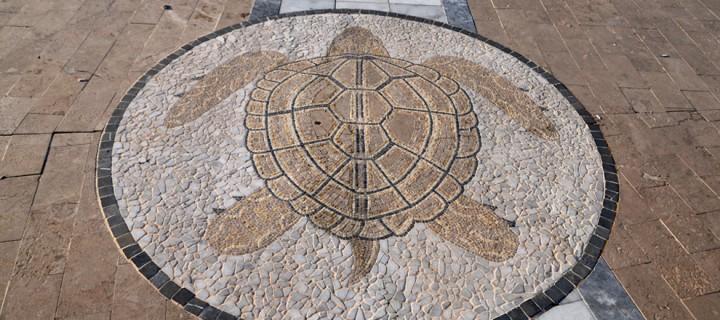 14 Mart / Kaplumbağaların Kış Uykusundan Uyanmaya Başlaması