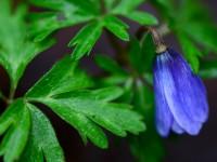 Karabük'ün Baharında Açan Çiçekler