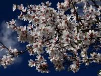 'Nevruz Çiçektir, Biyolojik Çeşitliliktir' Sergisi