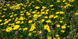 24 Nisan / Çiçek Fırtınası. İpek Böceğinin Yumurtadan Çıkması