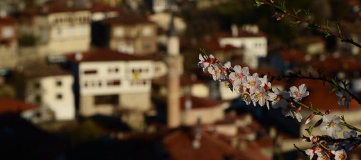 Safranbolu'da Badem Çiçekleri Zamanı