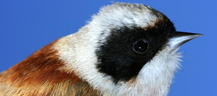 Iğdır Aras Nehri Kuş Cenneti'nde Dünya Biyoçeşitlilik Günü Kutlandı