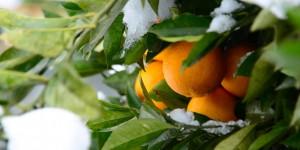 30 Mayıs / Dünya Meyvesuyu Günü