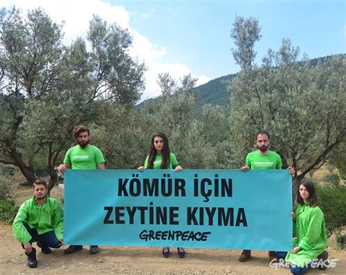 greenpeace zeytin
