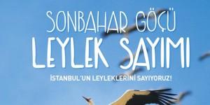 İstanbul'un Leyleklerini Saymak İster misiniz?