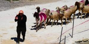 844. Çoban Bayramı