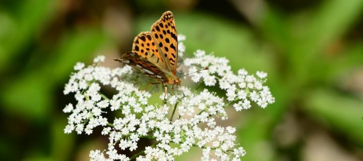 Kartepe'nin Kelebekleri