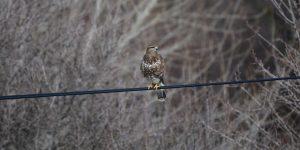 2 Kasım / Kuş Geçimi Fırtınası