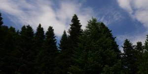 14 Ekim / Yağmur Ormanları Haftası