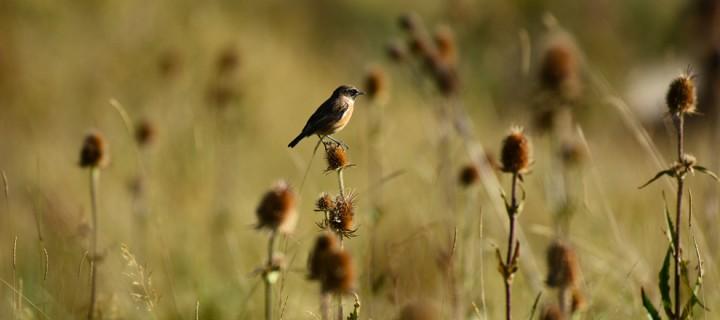 Keltepe'nin Kuşları