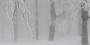 13 Ocak / Fırtına