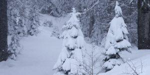 5 Mart / Ağaçlara Su Yürüme Zamanı