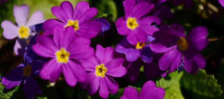 2 Nisan / Bereketli Yağmurlar. Çiçeklerin Açılması
