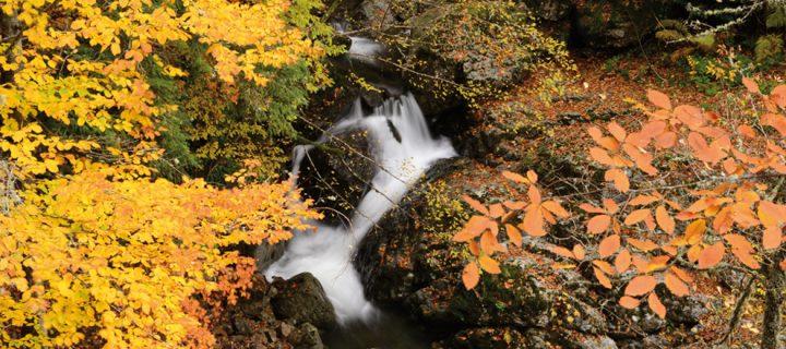 Yenice Doğa Turizmi Eylem Planı