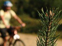 Kocaeli'nin Dağ Bisiklet Parkurları