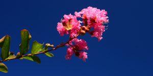 4 Mayıs / Çiçek Fırtınası