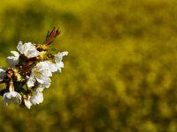 25 Nisan / Sittei Sevrin Sonu