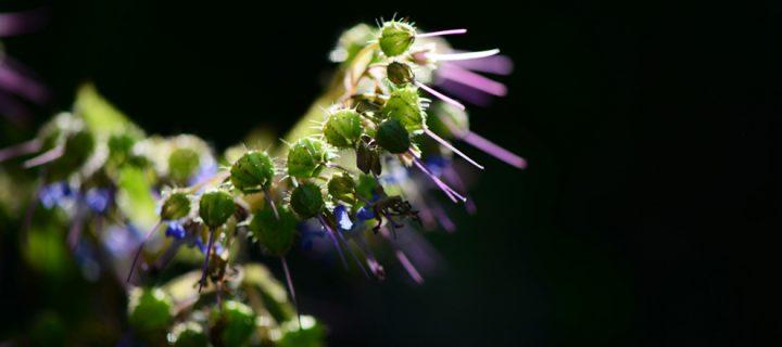 Yenice'nin Çiçekleri