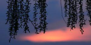 2 Haziran / Bevarih Rüzgârları Başlar