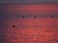 23 Mayıs / Denizkaplumbağalarının Akdeniz Sahillerine Gelişi