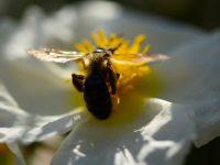 6 Ağustos / Arıların Bal Tutması