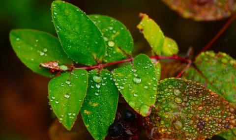 19 Temmuz / Fırtına ve Yağmur