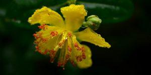 En Zengin Botanik Bahçe Kocaeli'ye Geliyor